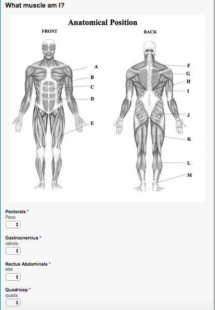 Human Body Image for a PE SLO Assessment